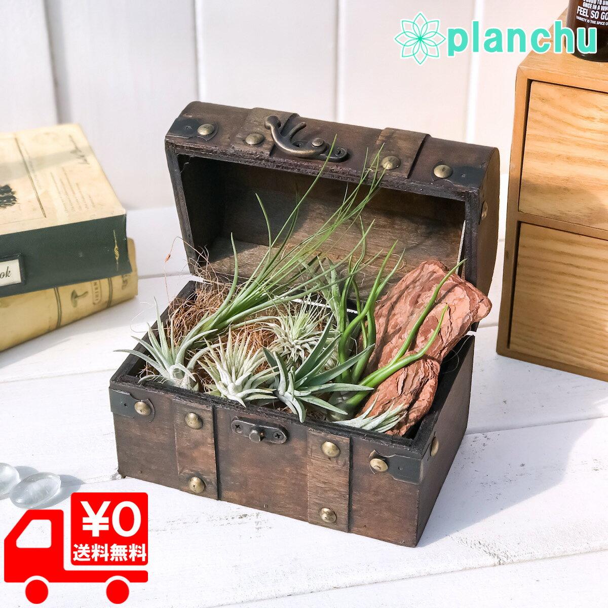 エアプランツ チランジア 8種 宝箱セット エアープランツ ティランジア 初心者向き Tillandsia ブロメリア ギフト