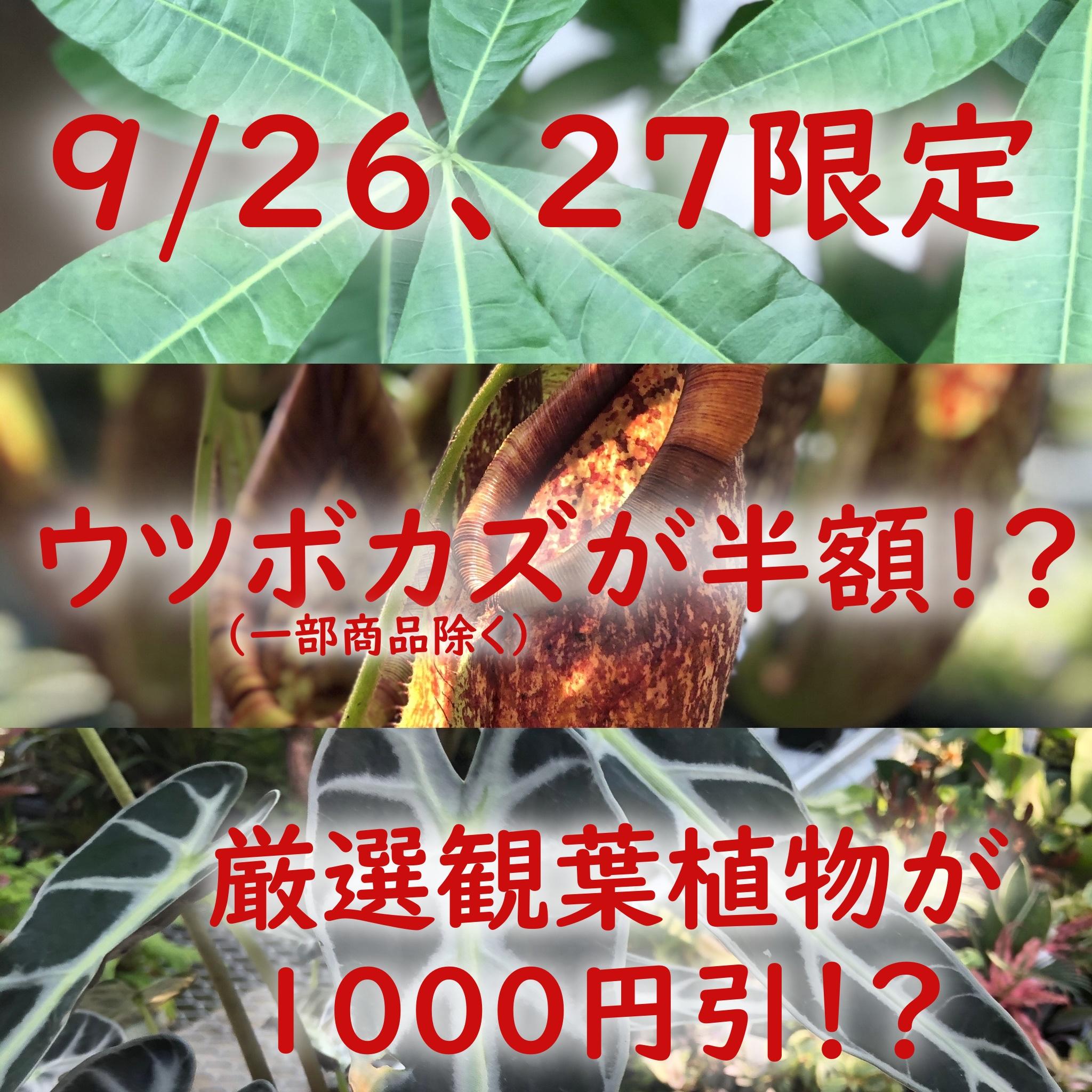 プランチュ実店舗初開催!? 半額!?1000円引き!?セール開催のお知らせ